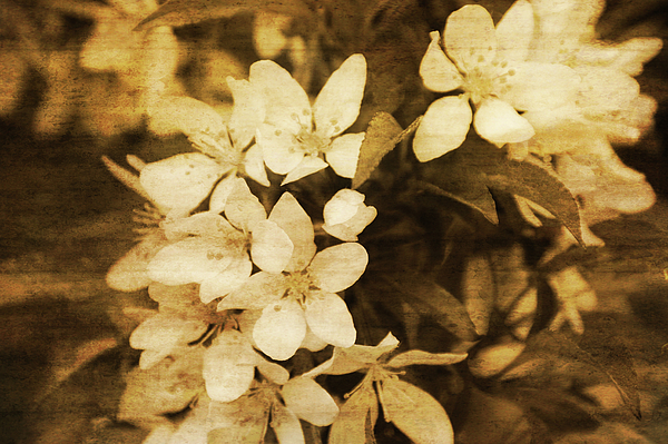 Flowers Photograph - Vintage by Terrie Taylor