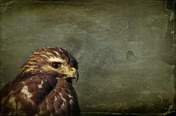 Osprey Photograph - Visions Of Solitude by Evelina Kremsdorf