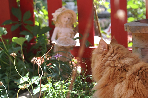 Garden Photograph - Wackie Loves The Garden  by Susan Perry