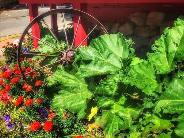 Wagon Wheel Photograph   Wagon Wheel Garden By Debra Martz
