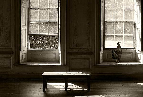 Interiors Photograph - Waiting For The Master by Ron Jones