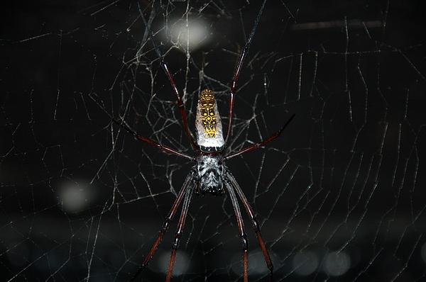 Spider Photograph - Waiting by HP Hwang