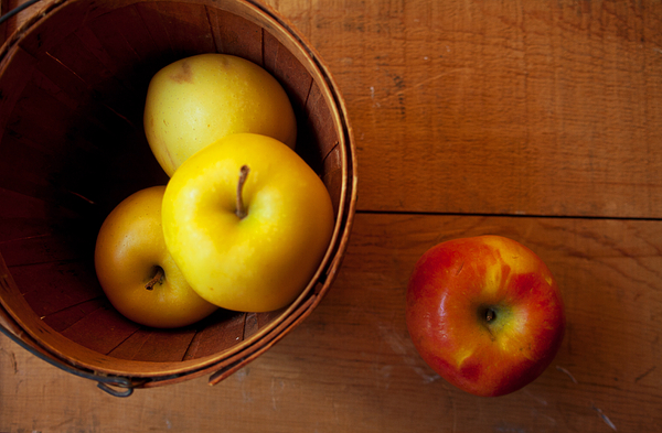 Apples Photograph - Waiting by Toni Hopper