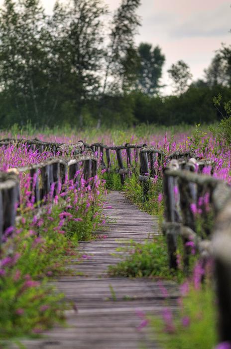 Nikon Photograph - Walking In Magic... by Nina Stavlund