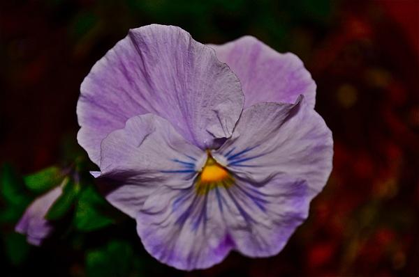 Purple Photograph - Wall Flower by Brynn Ditsche