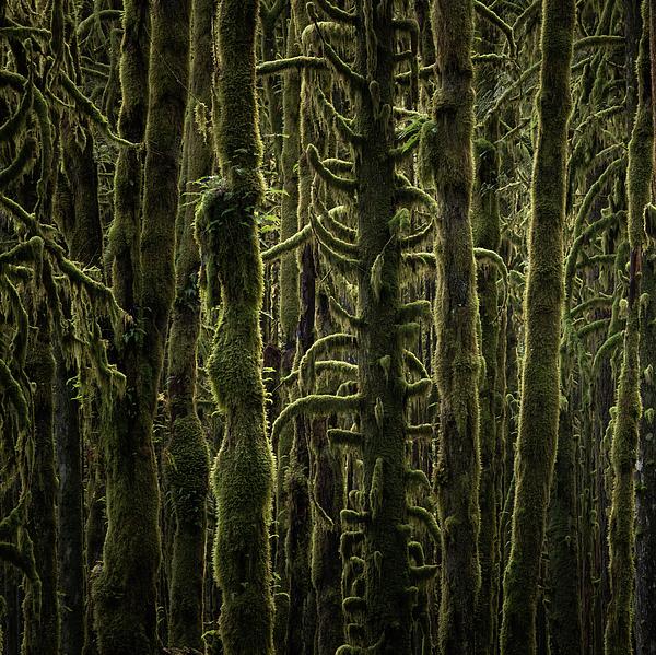 Wallpaper Trees Photograph by Adam Gibbs