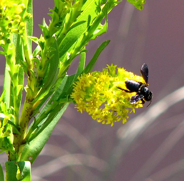Wasp Photograph - Wasp 1 by J M Farris Photography
