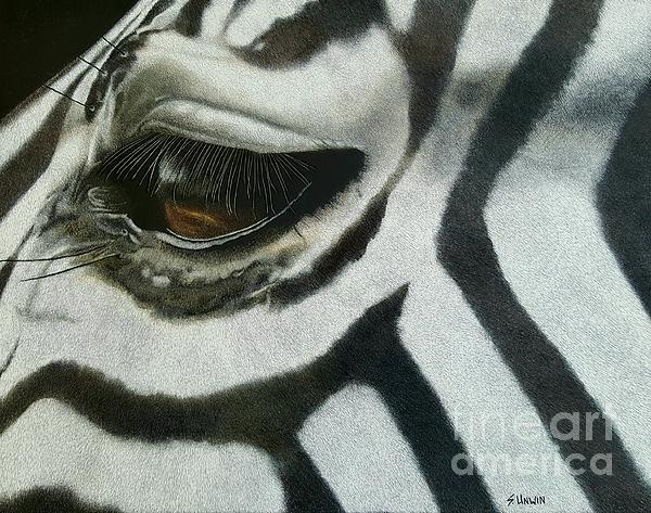 Animal Drawing - Watchful Eye  by Sheryl Unwin