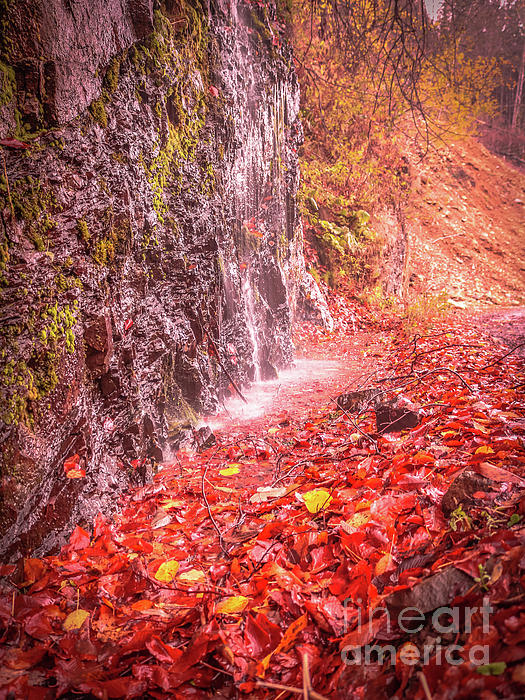 Autumn Photograph - Water Dripping On The Rock Wall by Claudia M Photography