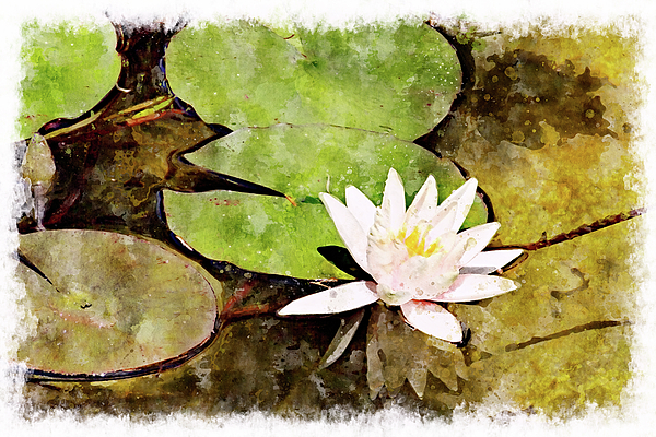 Water Digital Art - Water Hyacinth Two Wc by Peter J Sucy