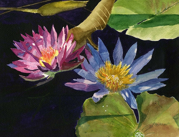 Waterlilies Painting - Water Lilies by Lynne Reichhart