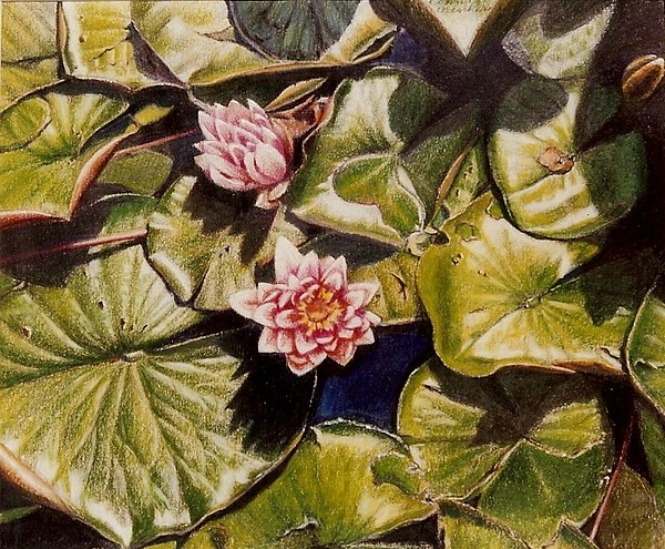 Pink Painting - Water Lilies On The Ringdijk by Constance Drescher
