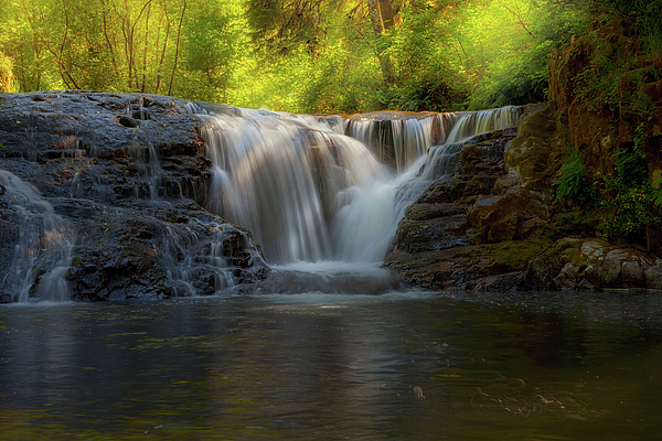 Siuslaw National Forest Photograph - Waterfall At Sweet Creek Hiking Trail Complex by David Gn