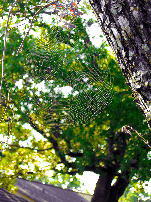 Web Photograph - Web by Kate Collins