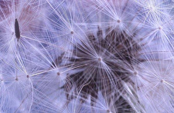 Purple Photograph - Web Of Lies by Jacqueline Lewis