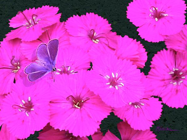 Flowers Painting - Welcome To The Neighborhood by Elorian Landers