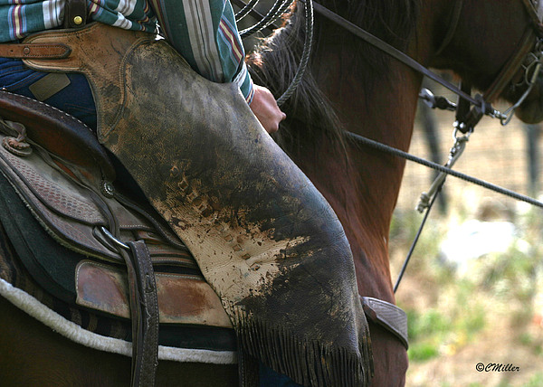 Cowboy Photograph - Well Used Chinks.. by Carol Miller