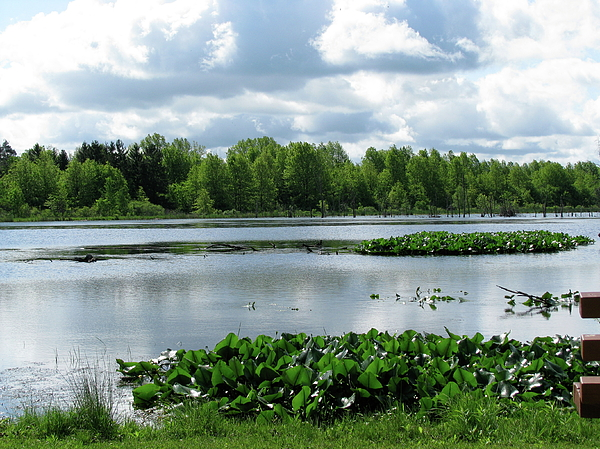 Wetlands Photograph by Trisha Dahm