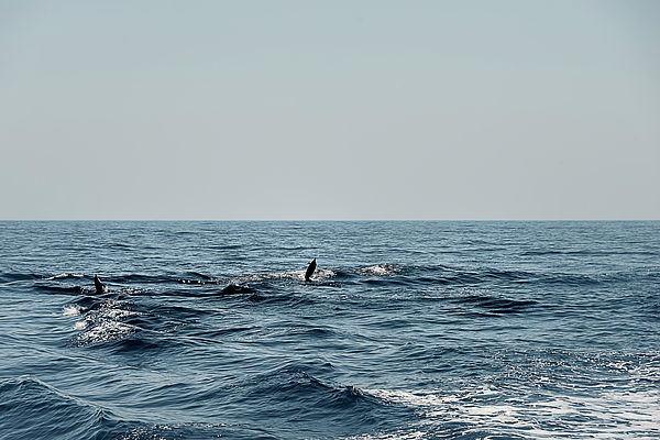 Mare Photograph - Whale Watching And Dolphins 2 by Enrico Pelos