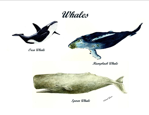 Animals Painting - Whales by Michael Vigliotti
