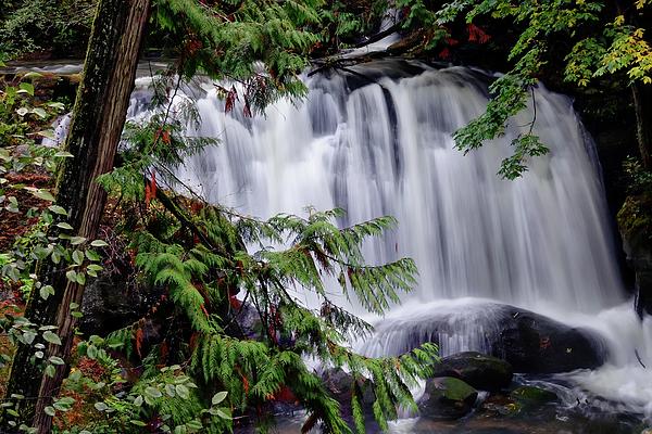 Whatcom Falls Photograph - Whatcom Falls Cascade by Rick Lawler