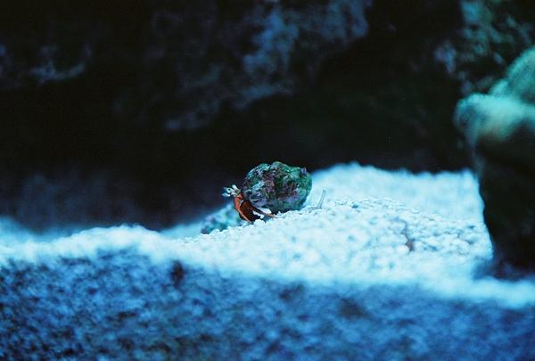 Shellfish Photograph - When Im Mobile by Daniel Robinson