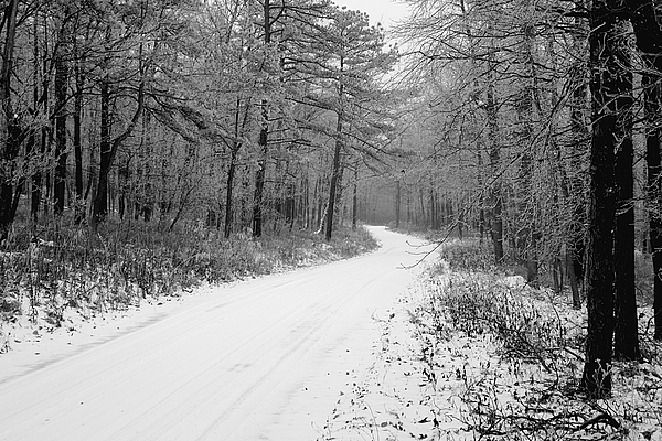 Winter Photograph - Where Will It Lead by Jean Macaluso