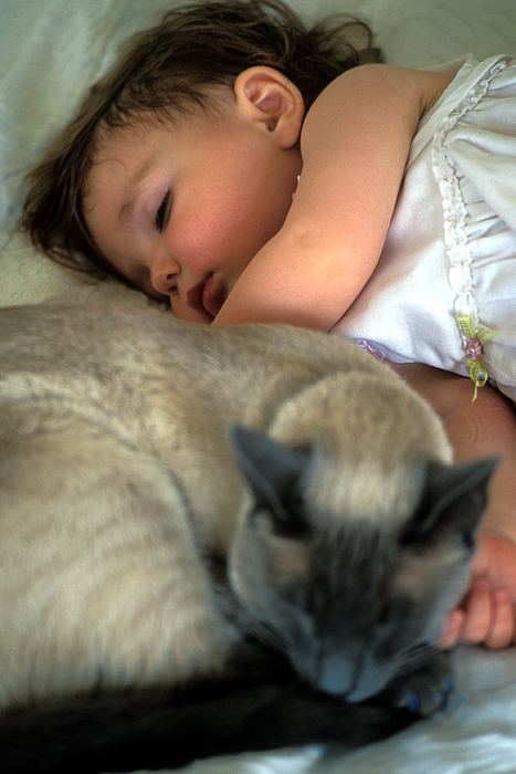 Cat Photograph - While Baby Sleeps by Kathy Yates