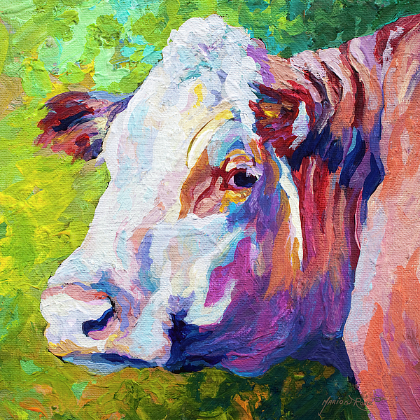 Cows Painting - White Face Cow by Marion Rose