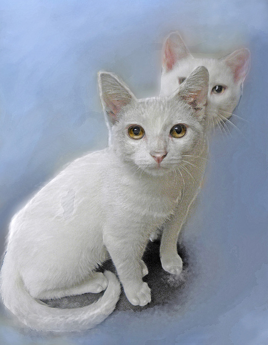 Kittens Painting - White Kittens by Jane Schnetlage