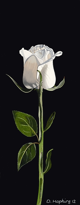 Rose Painting - White Rose by Darrell Hopkins
