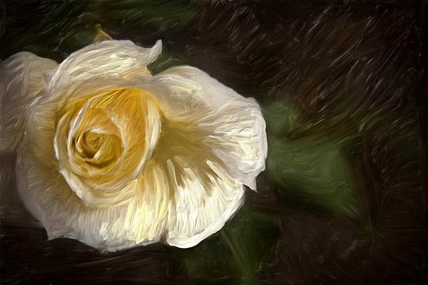 Graham Hughes Photograph - White Rose by Graham Hughes