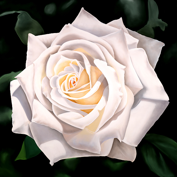 Flower Painting - White Rose by Ora Sorensen