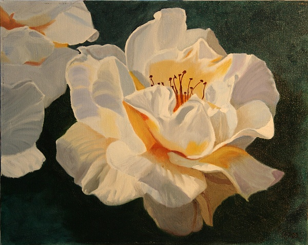 Floral Painting - White Rose by Robert Tower