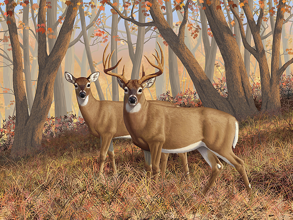 Deers Digital Art - Whitetail Deer Painting - Fall Flame by Crista Forest