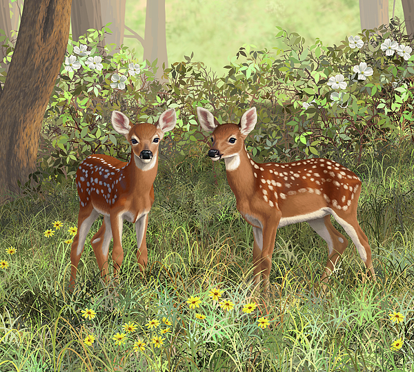 Whitetail Deer Painting - Whitetail Deer Twin Fawns by Crista Forest