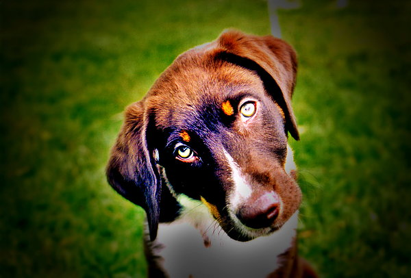 Dog Photograph - Who Me by Emily Stauring