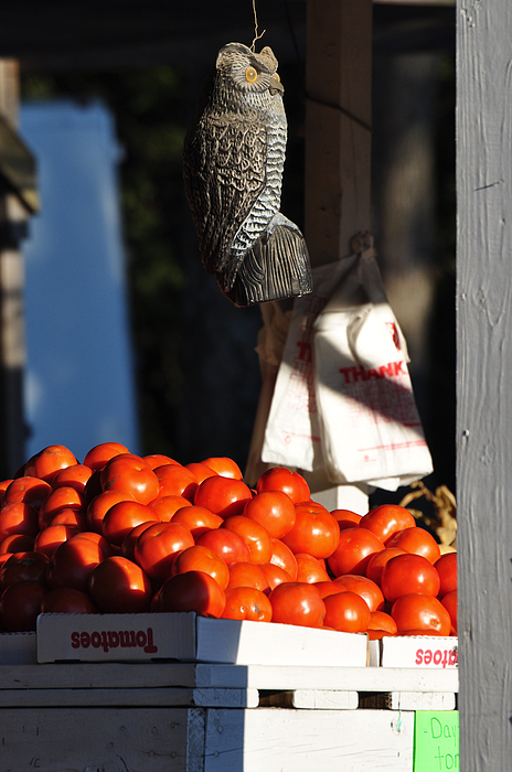 Still Life Photograph - Whos Tomatoes by Jan Amiss Photography