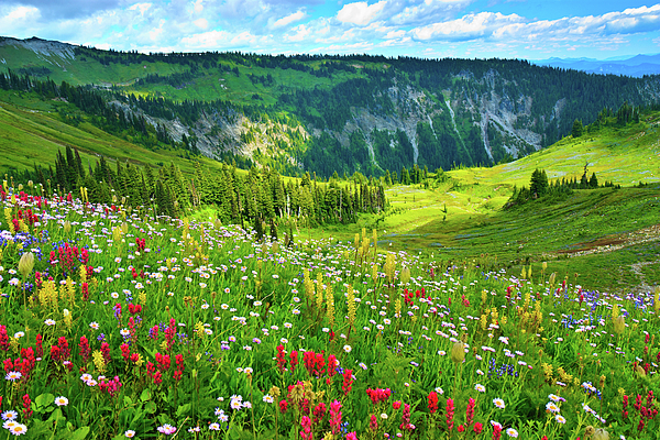 Horizontal Photograph - Wild Flowers Blooming On Mount Rainier by Feng Wei Photography