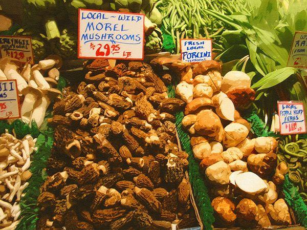 Wild Photograph - Wild Morell Mushrooms by Lydia L Kramer