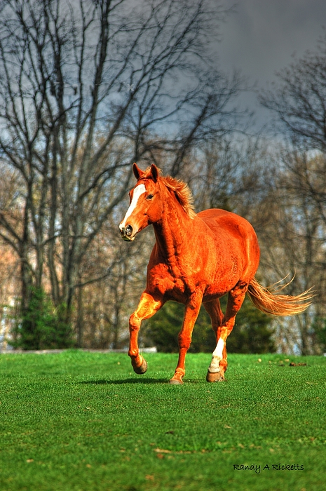 Horse Photograph - Wild One by Randy Ricketts