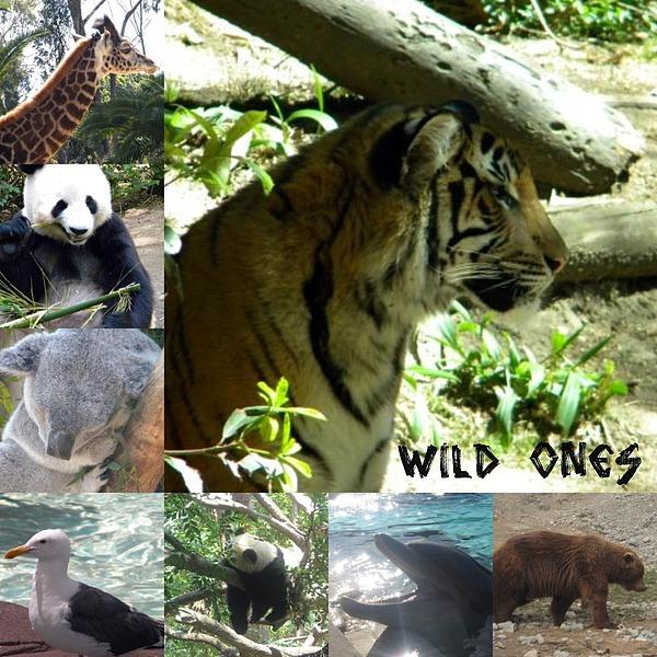 Tiger Photograph - Wild Ones by Amanda Eberly-Kudamik