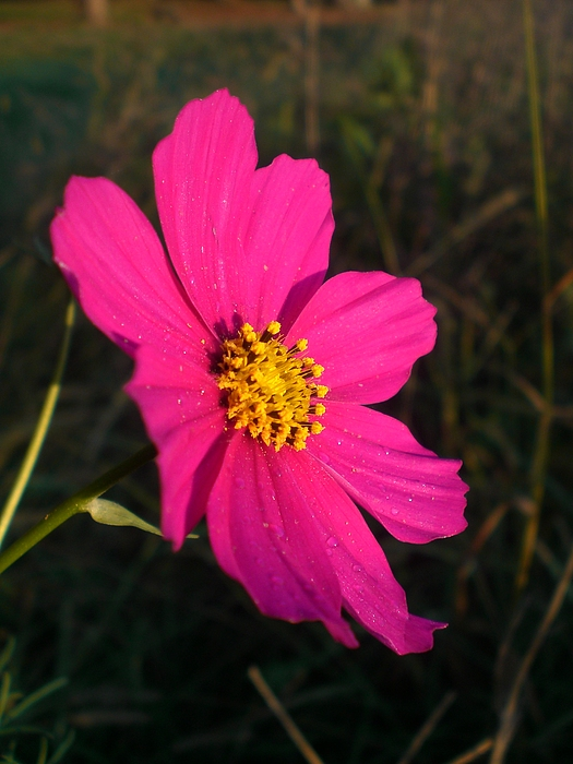 Flower Photograph - Wildflower Greeting The Day by Wendy Robertson