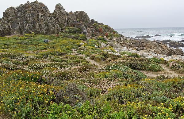 Pebble Photograph - Wildflowers At China Rock - Pebble Beach - California by Brendan Reals