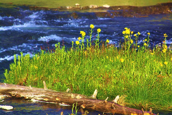 Landscape Photograph - Wildflowers By The River by Russell  Barton
