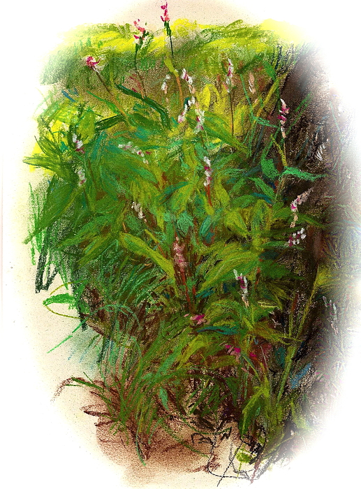 Flowers Painting - Wildflowers In Central Park by Peter Salwen