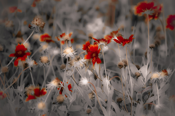 Wildflowers Photograph - Wildflowers Of The Dunes by DigiArt Diaries by Vicky B Fuller