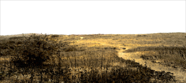 Landscape Photograph - Wildwood by Reed Orman