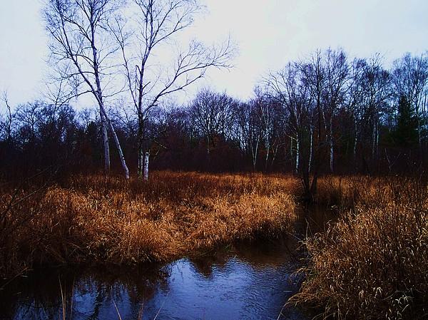 Nature Photograph - Winding Creek 2 by Anna Villarreal Garbis