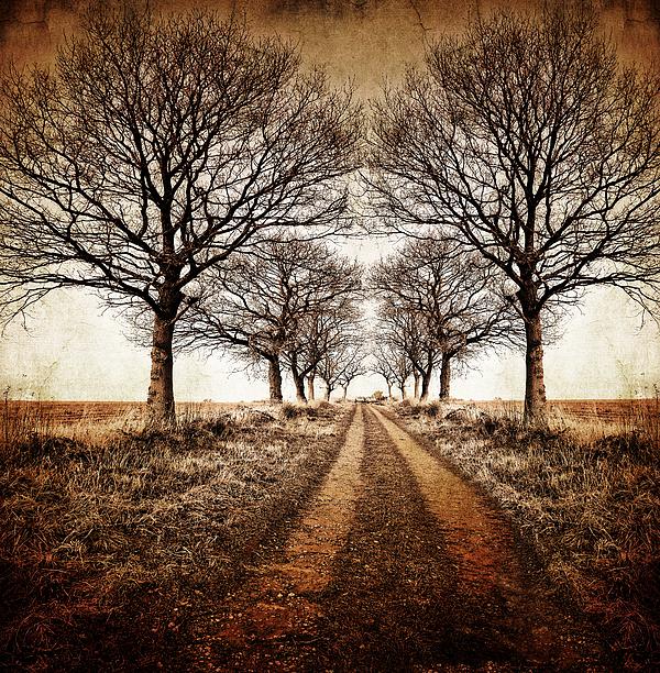 Avenue Photograph - Winter Avenue by Meirion Matthias